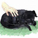 撫でられながら寝ている黒い犬の絵